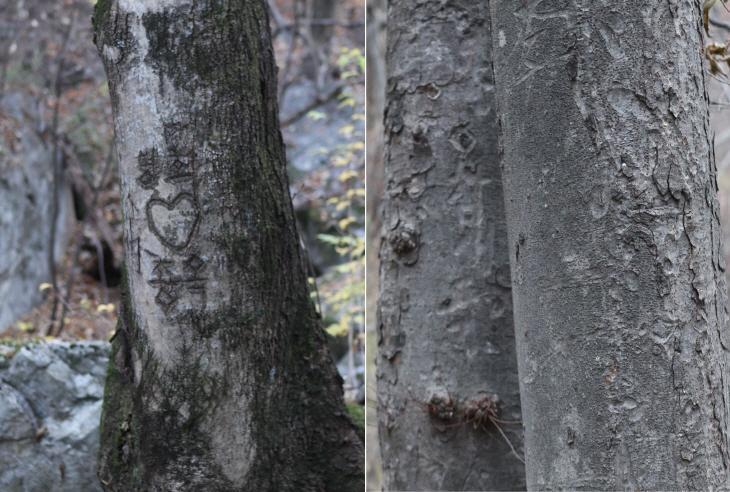 상처 나무