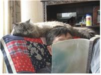 노승무 고양이