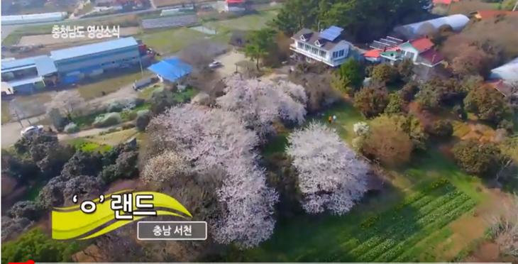 [영상]충남서천으로 꽃 구경오세요~