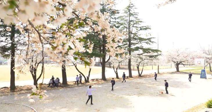 벚꽃 날리는 봄날 충청도의 어느 시골학교의 풍경