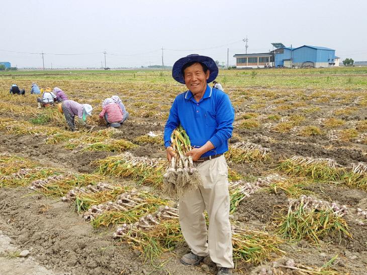 사본 -이종근 씨 논 타작물(마늘) 재배 사진