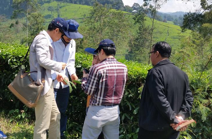 한밭대 인도네시아 글로벌엔지니어링프로젝트 차밭