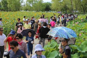 부여서동연꽃축제 사진 (1)