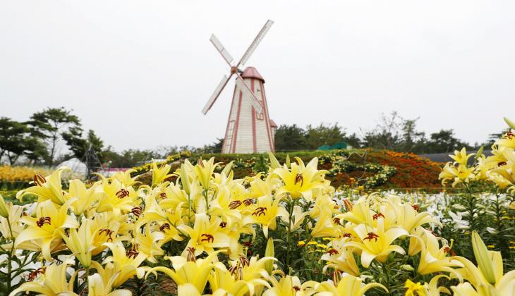 백합꽃축제 개막 2
