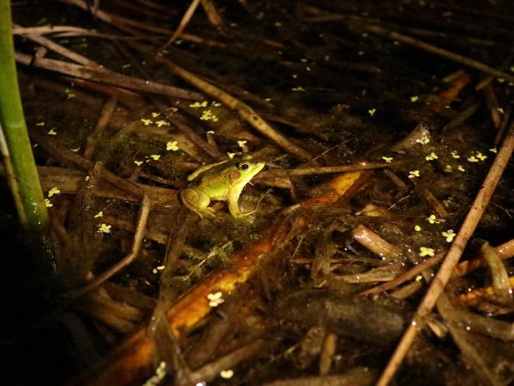 금개구리11
