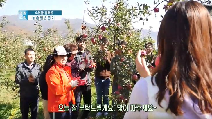 '맛있는 사과 따기'충남일손돕기 소원접수!!