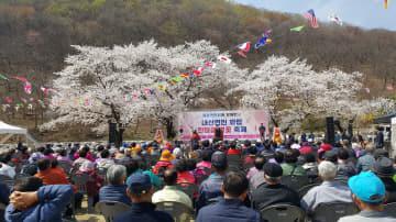 5. 내산면민 화합 한마음 벚꽃 축제 장면