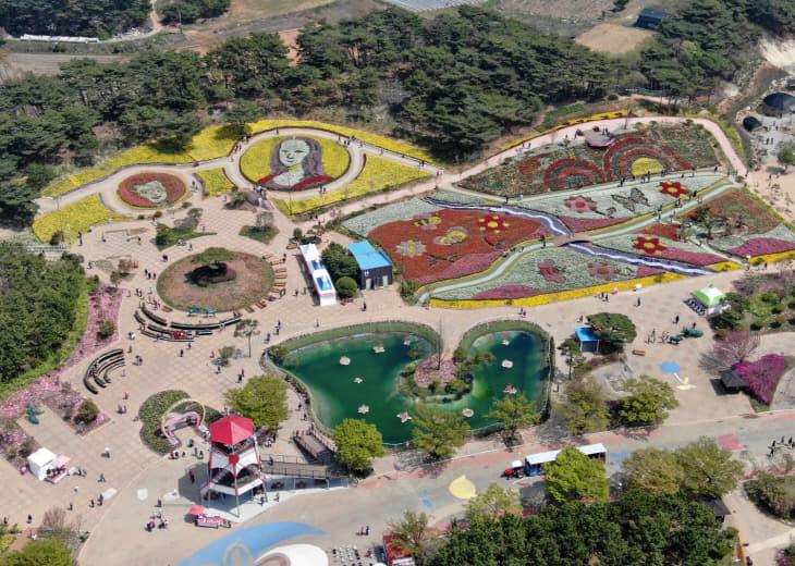 태안 꽃지해변 코리아플라워파크 튤립축제 (7)