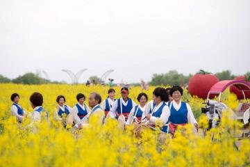 1. 2019 부여세도 방울토마토 유채꽃축제 장면  (2)