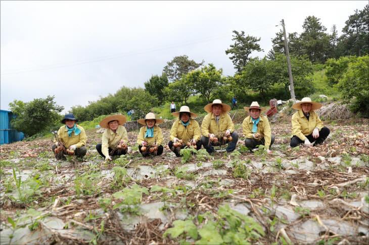 크기변환_무안군의회 양파수확 일손돕기