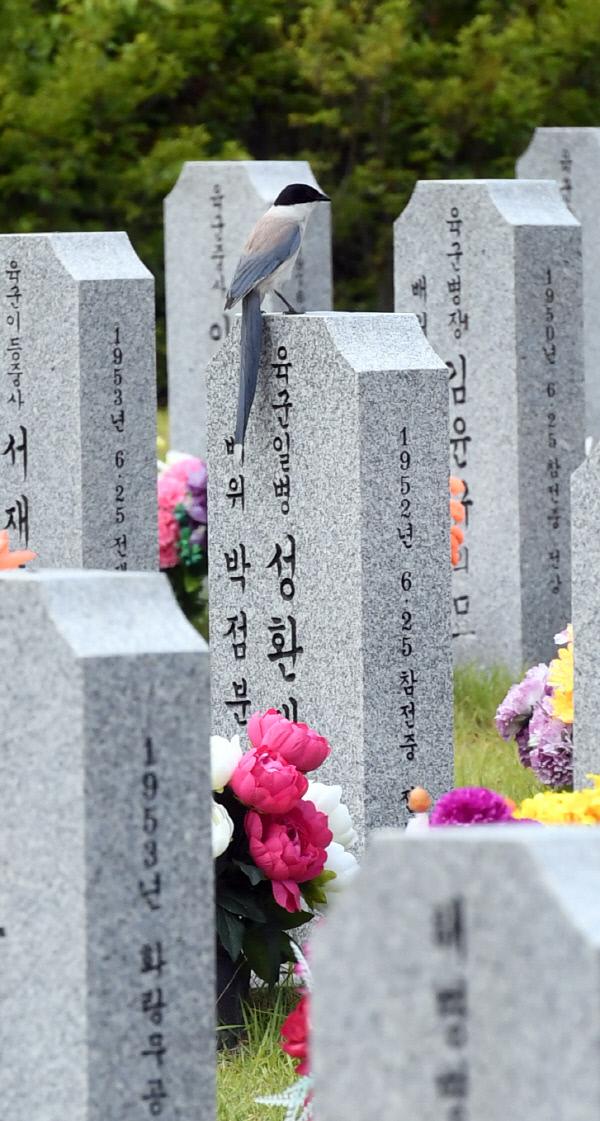 20190624-한국전쟁 참전 유공자 찾은 물까치7
