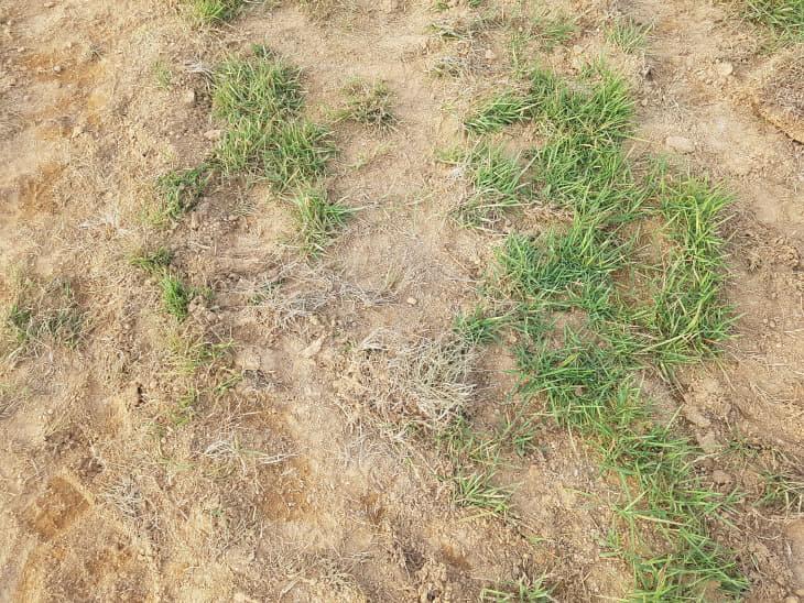 벌써부터 훼손된 잔디구장