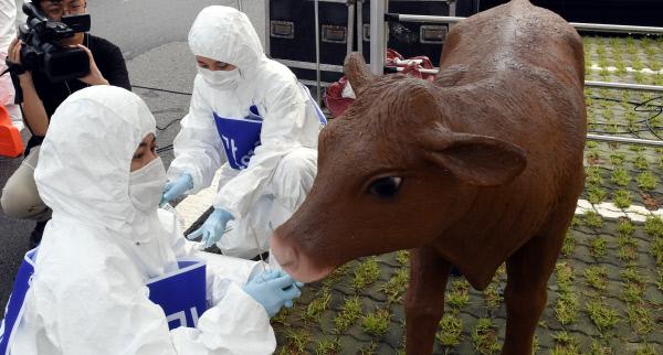 20190828-가축질병 가상 방역훈련