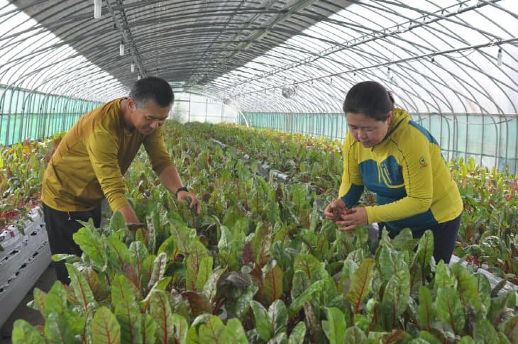 농기-ICT 활용 친환경 쌈채소 첫 출하
