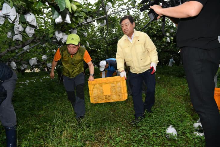 태풍 피해 과수농가 방문 일손돕기02