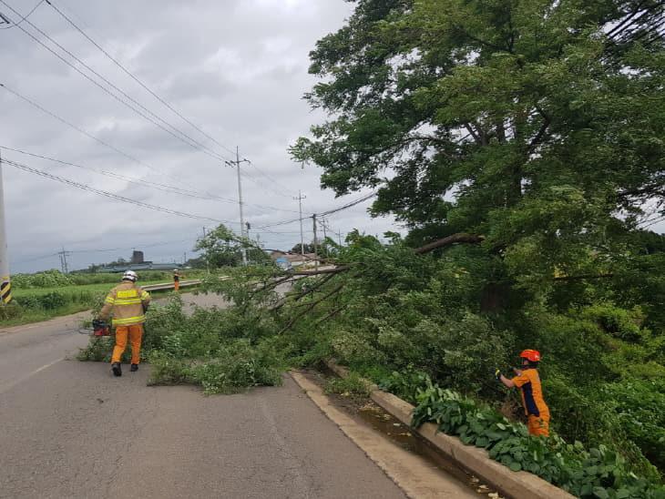 사본 -태풍 링링 나무제거 및 안전조치 (1)