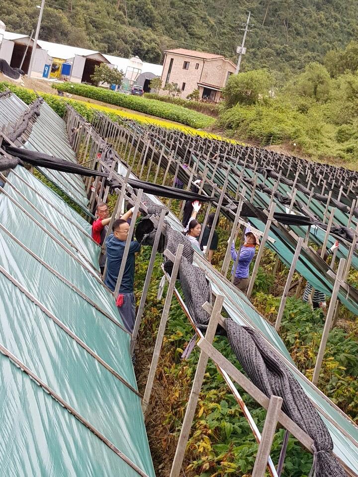 8. 원남면, 태풍 링링으로 인한 피해농가 일손돕기2