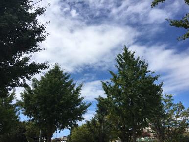 15일 날씨