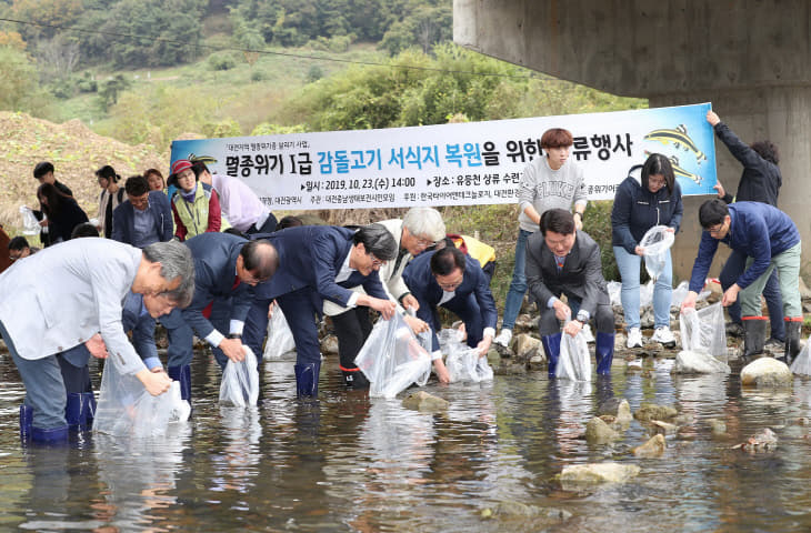 대전시, 지역생태계 상징'감돌고기'복원 나선다 (2)