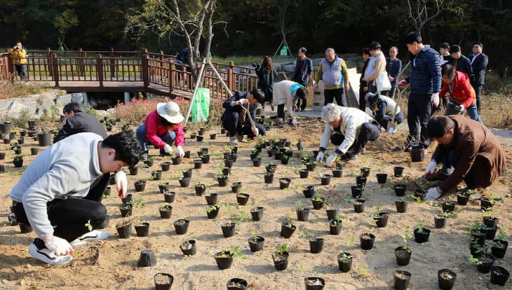대전시, 국제적 멸종위기종 미선나무 복원 (1)