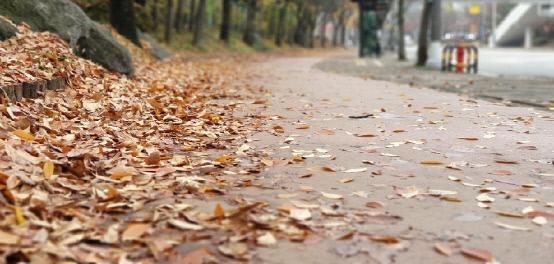 11월 8일 날씨