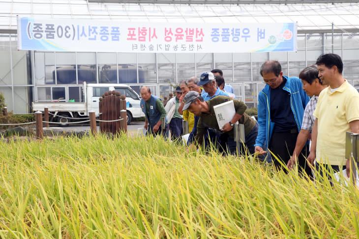 서천, 올해 쌀 농사 대풍 기록