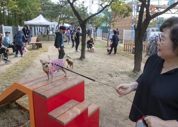 1.  대덕구, 반려동물 놀이터 인기몰이(2)