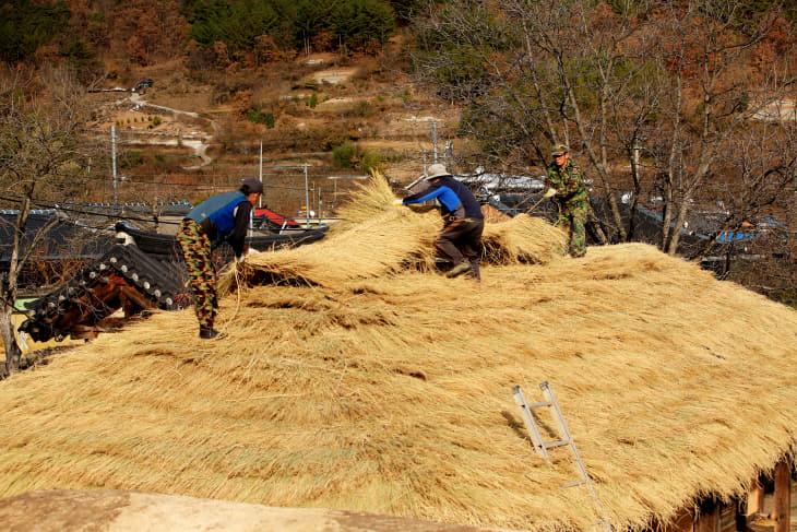 2019-12-02 의령군, 전통가옥 초가지붕 이엉 잇기 한창2