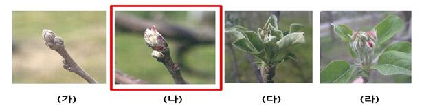 그림1]사과 방제시기
