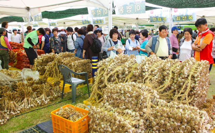 보도1)지난해 단양마늘축제 사진