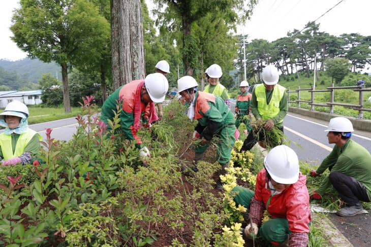 1.보성군, 경제 활성화 위해 산림분야 일자리사업 추진