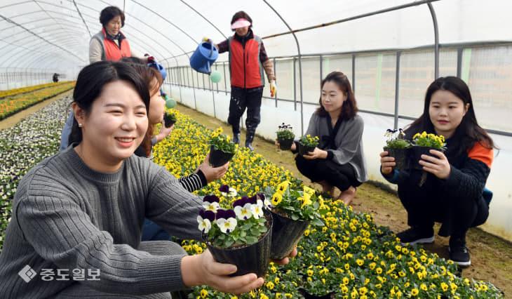 20200219-봄꽃 만개1
