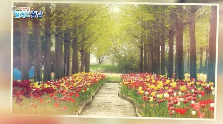 코로나 속보로 지친 감성! 꽃으로 안구정화 하세요. 아산 세계꽃식물원