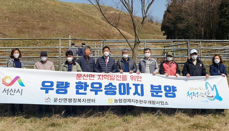 (서산)0326 송아지 분양 1