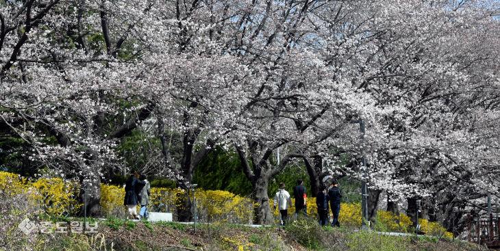 20200329-꽃구경도 사회적 거리두기