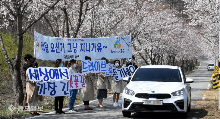 20200331-드라이브 스루 벚꽃 구경 캠페인1