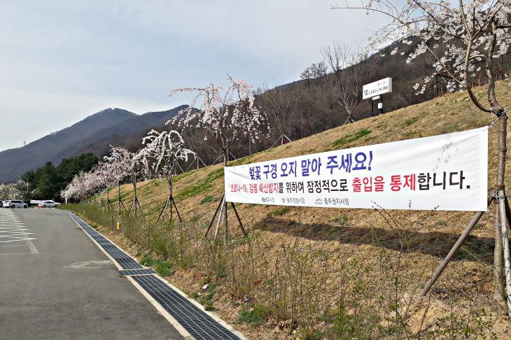 200402 충주댐 벚꽃길 통제1