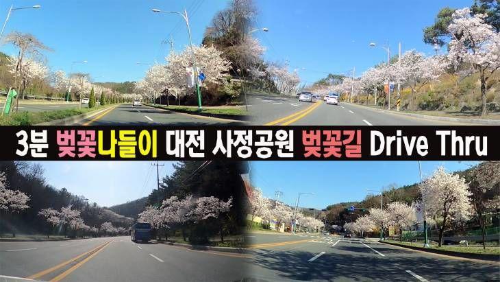 [영상]3분 벚꽃 나들이(?) 대전 사정공원 벚꽃길 Drive Thru