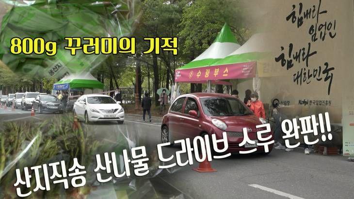코로나로 판로 막힌 봄철 산나물 대전서 완판된 사연은?
