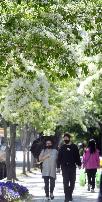눈길 끄는 이팝나무