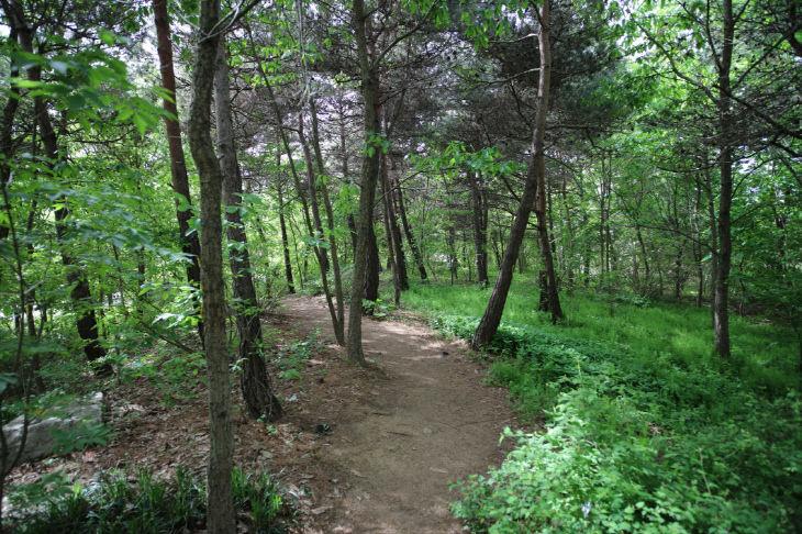 국립생태원의 졸참나무 군락