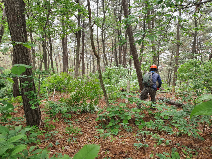 서천, 맞춤형 숲 가꾸기사업 추진