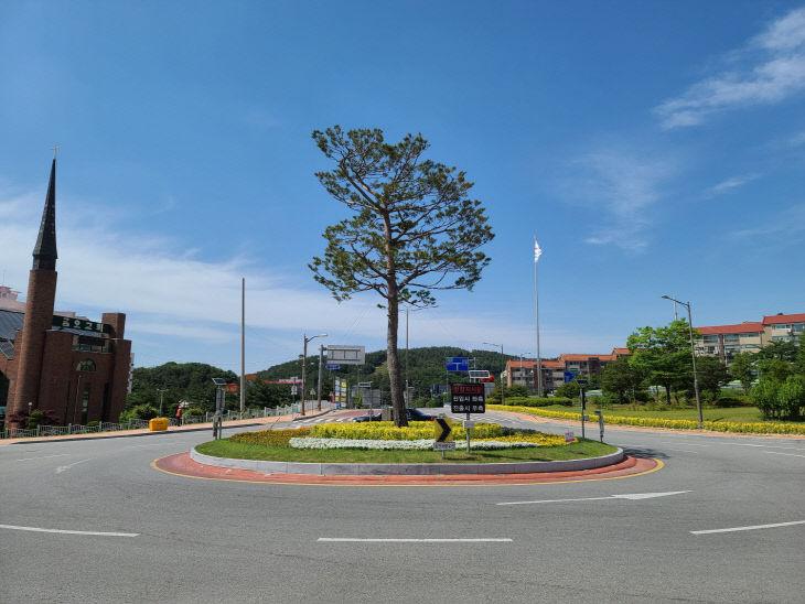 보도자료05_황금사철나무가 식재된 가로경관01
