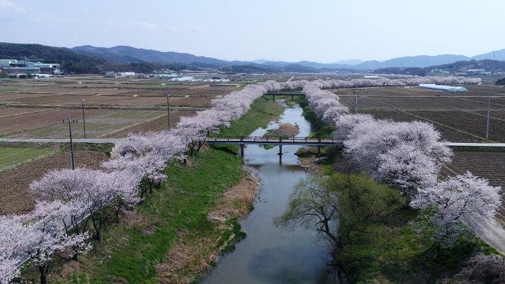 홍동천 벚꽃길 추가 조성