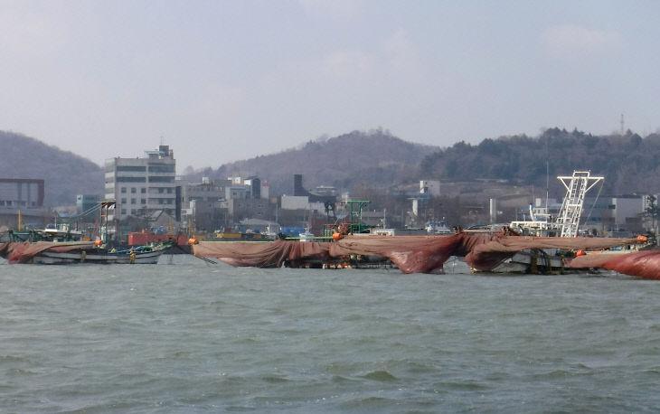 군산 실뱀장어 안강망 분포사진2