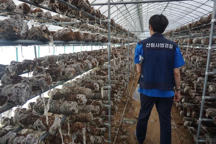 관련사진1-버섯종균접종배지 사용 농가 조사