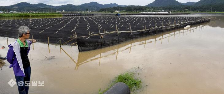 금강 범람으로 침수피해 입은 금산…망연자실한 농민