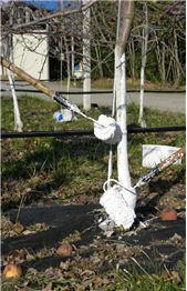 03-1 동해 피해예방 관련 사진(백색페인트 칠하기)