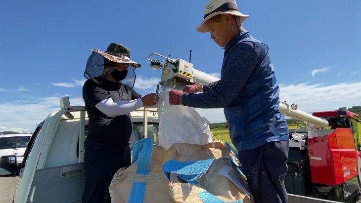 사본 -채종포 벼 종자 수확