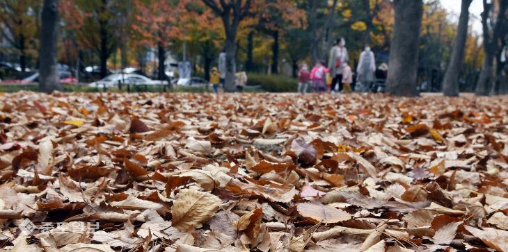 이틀 앞으로 다가온 입동과 쌓인 낙엽